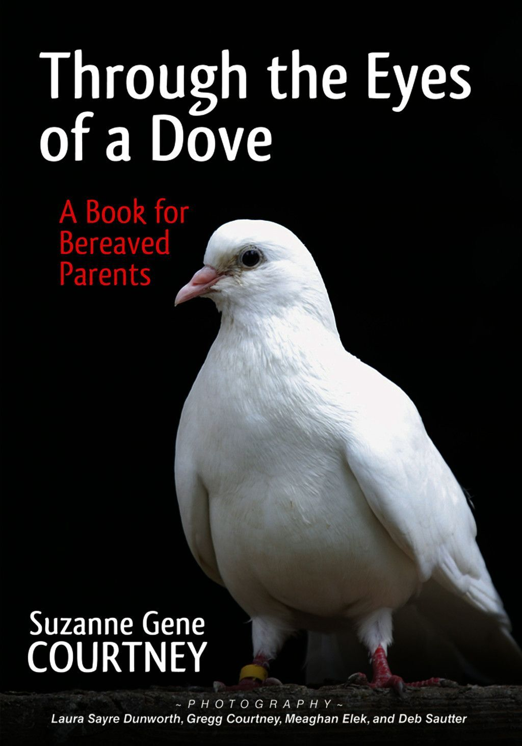Through The Eyes Of A Dove