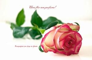 Uma flor sem perfume